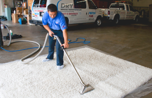 Organic San Francisco Carpet Cleaning Technicians Are Highly Trained and Certified